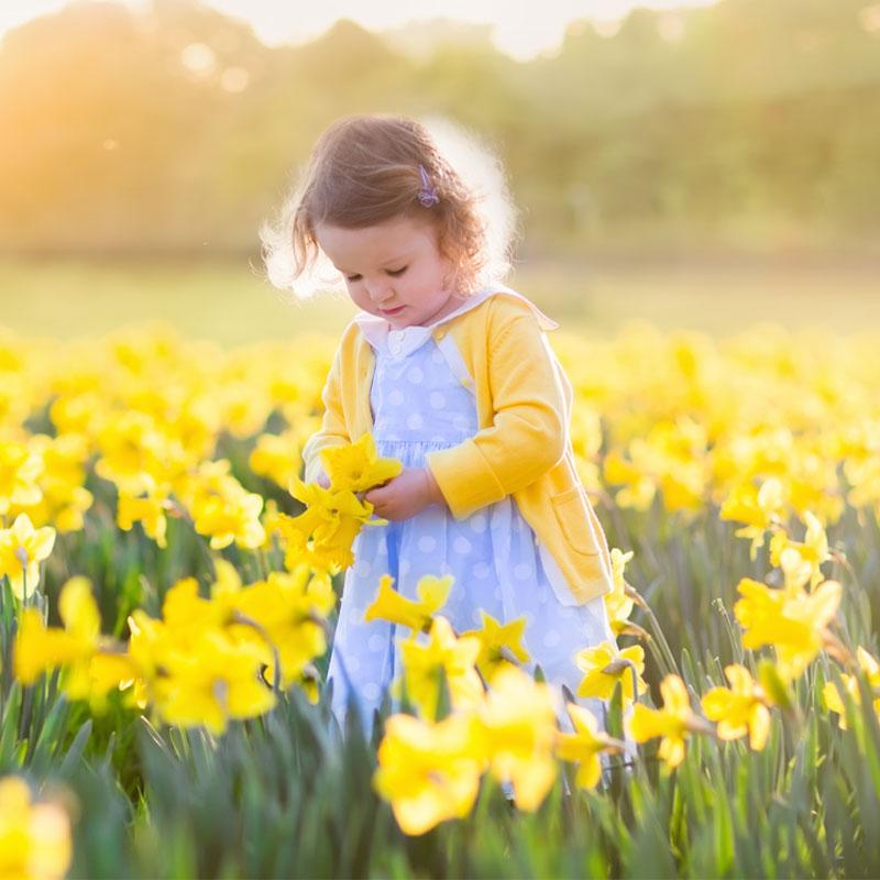 Blooming Flower in Spring